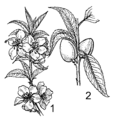 Almond plant (PSF).png