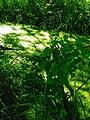 Alto Adige Suedtirol Biotopo Rio dei Gamberi Krebsbach photo by Giovanni Ussi - 42.jpg