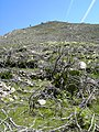 Alvoco da Serra - rochas.jpg