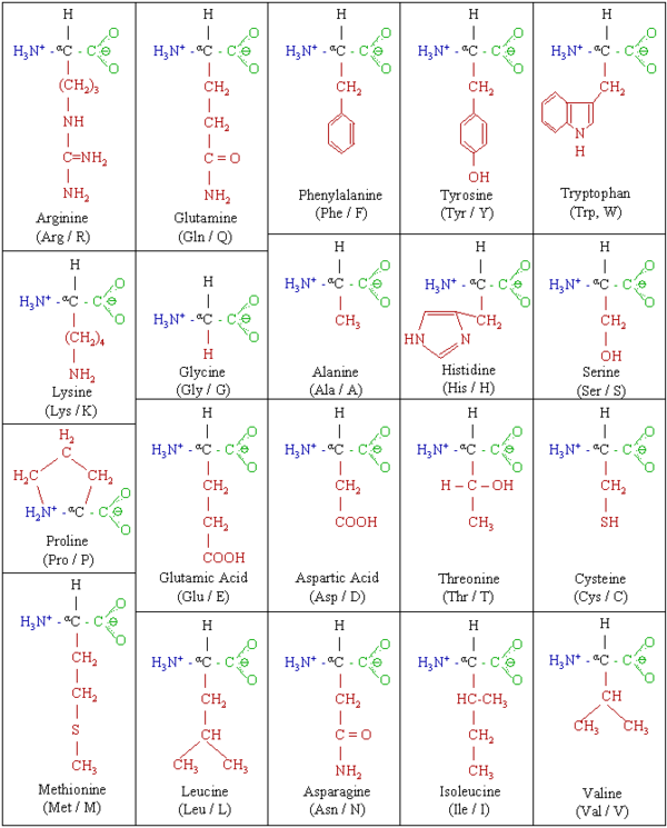 Biochemistry/Proteins/The chemistry of proteins - Wikibooks, open ...