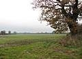 An overcast day in late November - geograph.org.uk - 1060457.jpg
