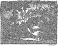 Anatomia Britannica- a system of anatomy Fleuron N001319-1.png