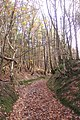 Ancient Track in Burnt Bank Wood - geograph.org.uk - 1593432.jpg