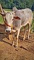 Animal Photography.jpg