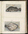Animal drawings collected by Felix Platter, p1 - (17).jpg