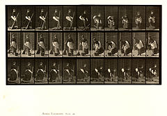 Animal locomotion. Plate 212 (Boston Public Library).jpg