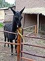 Animals of Peru 136.jpg