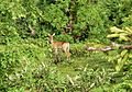 Antelope Mole NP 002 2006 B002.jpg