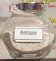Antigua Sand.jpg