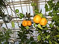 Appelsini in Joensuu - panoramio.jpg