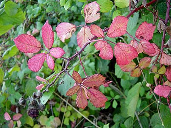 English: Approaching autumn. A few days past t...