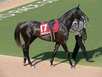 Martingale (tack) - Irish martingale joins the reins, seen here on a racehorse