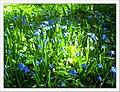 April Freiburg Botanischer Garten - Master Botany Photography 2013 - panoramio (2).jpg