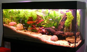 Fishkeeping - An aquascaped freshwater aquarium