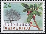 Arbutus andrachne. Stamp of Macedonia.jpg