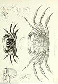 Archives du Muséum d'histoire naturelle (1836) (20318032852).jpg