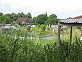 Armour Hill Allotments - geograph.org.uk - 23484.jpg