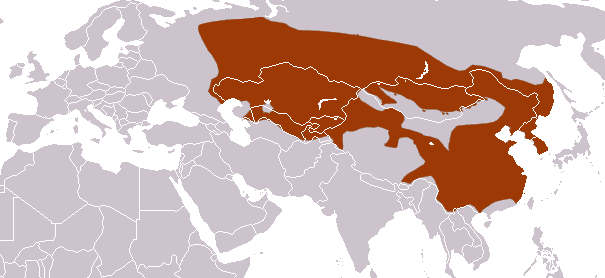 Asian Badger area
