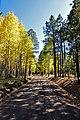 Aspen trees line FR418 (3972267100).jpg