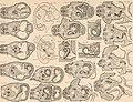Atlas d'embryologie (1889) (19722760443).jpg