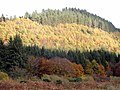 Autumn Colours, Potterland Hill - geograph.org.uk - 1280427.jpg