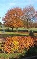 Autumn colours, Battisford - geograph.org.uk - 614055.jpg
