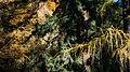 Autumn in Burcina-2.jpg