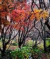 Autumn in Christchurch. (9013779051).jpg