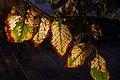 Autumn in iran پاییز در ایران- استان قم 12.jpg