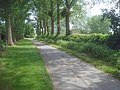 Avenue of trees leading to Ashleworth Court - geograph.org.uk - 1418306.jpg
