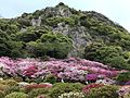Azalea Valley in Mifuneyama Garden and Mount Mifuneyama 5.jpg
