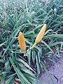 BCBG Flowers 21.jpg