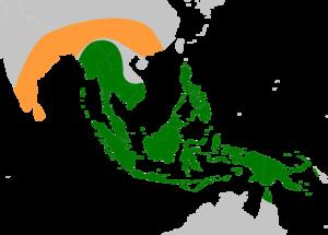 Musa acuminata - Image: Banana ancestors (Musa acuminata and Musa balbisiana) original range