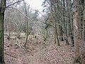 Bandywell wood - geograph.org.uk - 315813.jpg