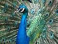 Bangabandhu Sheikh Mujib Safari Park 20.jpg