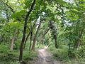 Banjička šuma 009.jpg