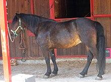 Cavallo Bardigiano