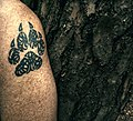 Bark and skin ^3 - Flickr - Stiller Beobachter.jpg