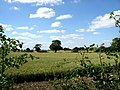 Barley Field - geograph.org.uk - 200779.jpg