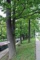 Baumgruppe 399 Hietzing.jpg