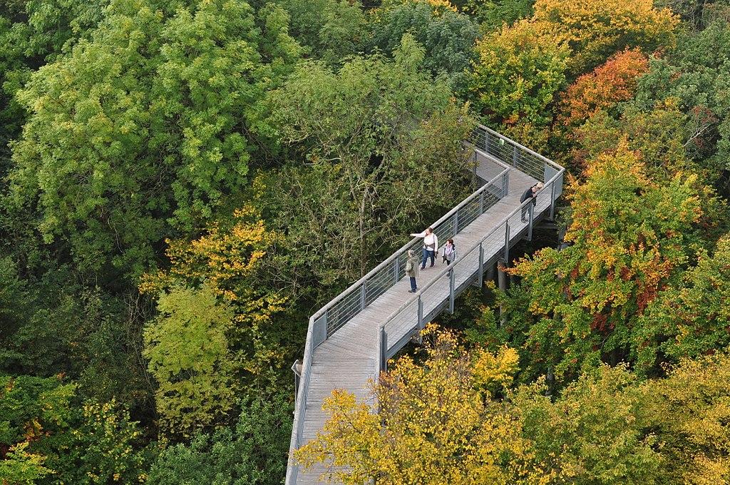 Baumkronenpfad im Nationalpark Hainich (UNESCO-Weltnaturerbe Alte Buchenwälder Deutschlands)
