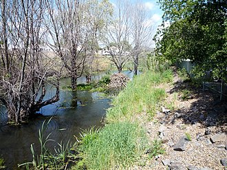 Napa River - Beaver Lodge on Tulucay Creek at Soscol Avenue in downtown Napa, courtesy of Rusty Cohn