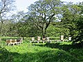 Beehives - geograph.org.uk - 438515.jpg