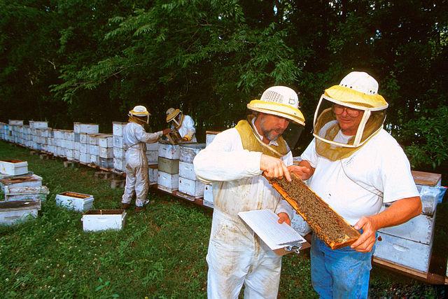 Moderné včelárstvo
