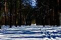 Berlin-Grunewald, Naturfotografie 18, Wald und Weg im Schnee, März 2013.jpg
