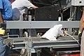 Beverly and Farley communities fill sandbags June 20, 2011 (5854332515).jpg
