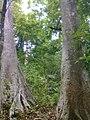 Bhoothathankettu forest Range - panoramio.jpg
