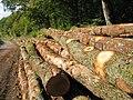 Billes de bois sur le bord d'une route - 002.JPG