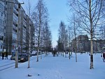 File:Birch alley, Petrozavodsk.jpg