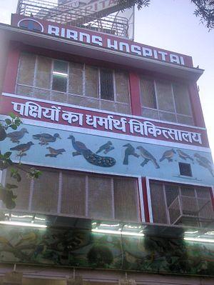 Sri Digambar Jain Lal Mandir - Birds Hospital at Śrī Digambar Jain Lāl Mandir